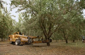 Custom Farming of Almonds and Walnuts - Fortier Farms